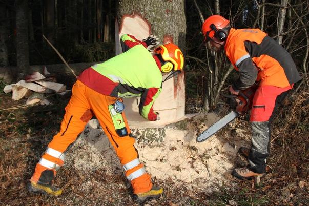 Holzarbeiter beim Fällen eines Baumes
