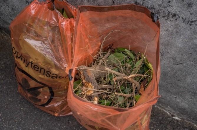 Diese Neophytensäcke stehen am Strassenrand für die  Kehrichtabfuhr bereit. Sie wurden mit Wurzeln und Früchten  einer Kirschlorbeerhecke gefüllt.